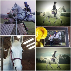 Hunting, eventing, jumping mare who loves to work