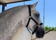Outstanding Beautiful Stallion