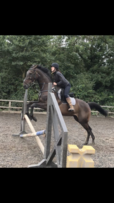 STUNNING 17hh TB GELDING WITH SERIOUS POTENTIAL
