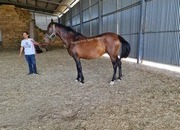 Top Quality PRE Broodmare