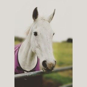 15HH CALM ALLROUNDER WANTED