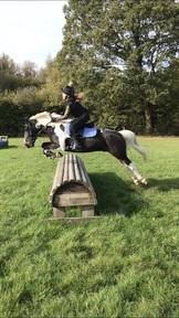Safe & lovely 13.2 pony