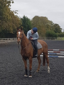 Very safe 16.1 thoroughbred
