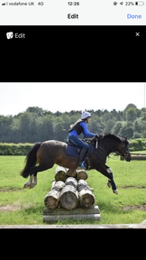 8 year old all rounder mare
