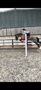 *15HH WELSH FOR SHARE*