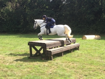 14.2hh School Master for sale
