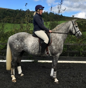 6 year-old - Irish Sport - All Rounder - Mare - 16.1 hh - Powys