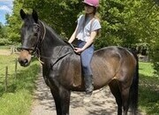 Super 15.2hh All-rounder