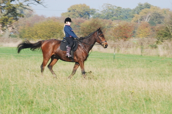 Retrained Well Bred gentle giant TB