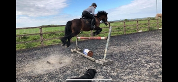 REDUCED Sylton Comet  13.1hh BS Jumping Pony