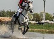 172cm Scopey 2*/1.30m horse