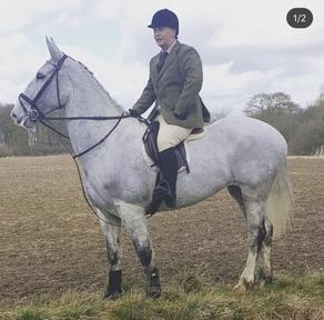 17hh Grey 10yr old mare