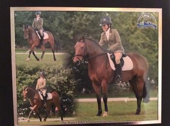 14.2hh Dressage/ Hunting pony