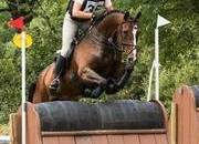 16.2h Eventer / Showjumper by Lux Z x Presenting
