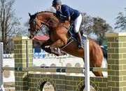 6yr Old Eventer/Showjumper 16.2hh