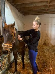 Fully Qualified and Insured Equine Sports Massage Therapy