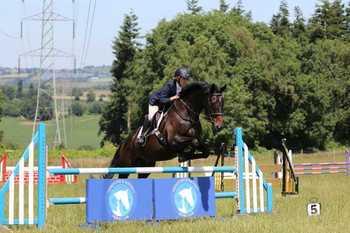 Smart X racehorse eligible ROR.