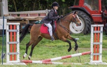 """13hh 2"""" section b broodmare"""