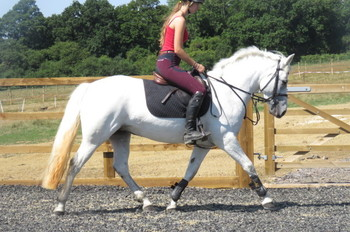 POTENTIAL TOP CLASS PONY CLUB/EVENTING/BS PONY