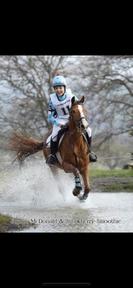 Pony Club, Riding Club competition pony