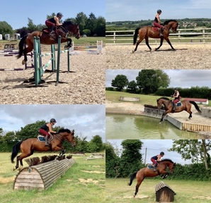16.2hh 6yo potential star based in kent