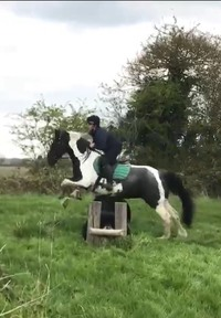 Barrontop Kizzie Riding Club Mare **for sale**