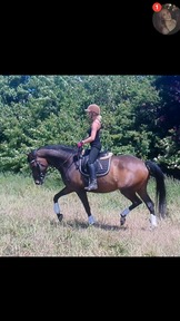 Stunning dressage and/or show mare.