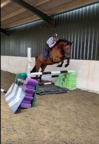 QUALITY WARMBLOOD GELDING