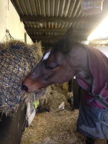 Sharer wanted for lovely horse