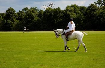 Unique brilliant handsome all rounder excels at polo, eventing, hunting endurance