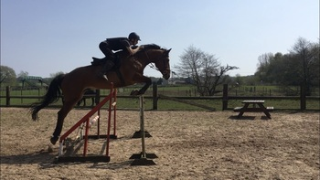17hh 9 year old Irish sports horse
