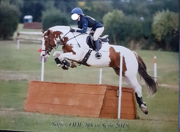14H2 GELDING FOR LEASE ONLY, EVENTING, HEREFORDSHIRE