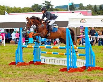 Talented Dutch warmblood mare by Asca Z X Odermus X Animo (2009)