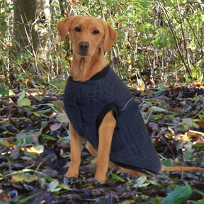 Weatherbeeta - Puffer Dog Coat