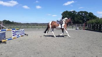 15'2 3yr Filly for sale