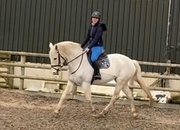 Lovely 16.1hh Grey mare.