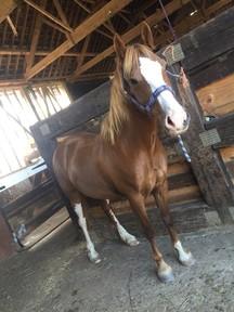 amazing show pony!