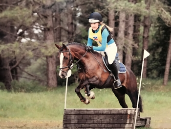 FOR SALE , 14hh all rounder