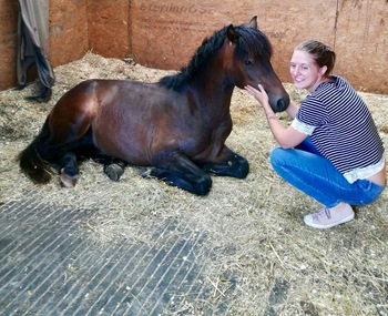 Welsh c yearling colt - well bred