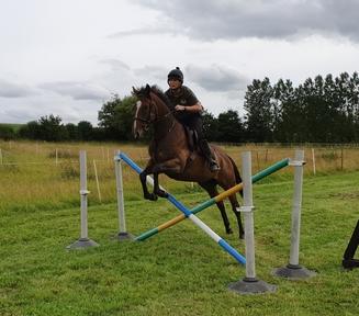 Lovely honest little mare