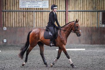 Easy uncomplicated dressage prospect