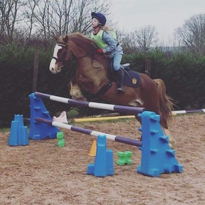 Fabulous Welsh sec C PC/eventing  or hunt pony 13.1hh