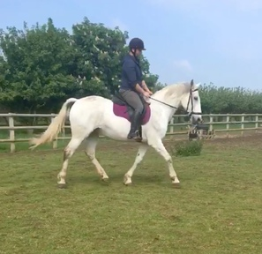 Beautiful all round mare
