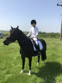 Horse for part loan in Warwickshire