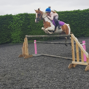 13.2 Show jumping/competition pony