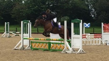 Welsh section D mare 14 years old