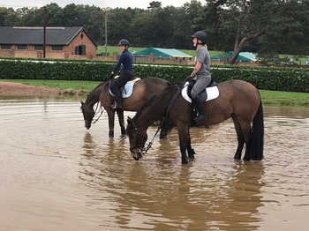Sharer required to help with these two beautiful Old Mares for Hacking