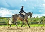 Superb 17hh 6 year old Irish Sport horse
