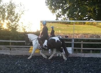 FOR LOAN: Gorgeous 14.2 coloured gelding