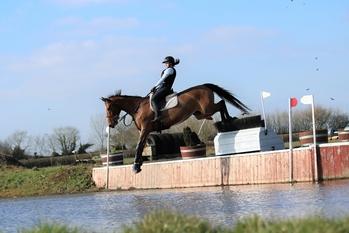 16.3hh bright bay Irish Sports Horse Mare by Catherston Dazzler